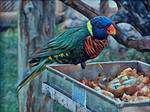 Animalia_Lorio-arco-iris by Egil21