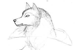 Werewolf/Wolf/Wrognoth Head Sketch by Maverick-Werewolf