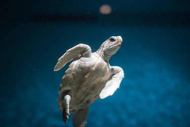 Turtles by LeMex