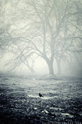 .:...silence.: by Edhelamarth