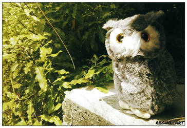Hedwig the Snowy Owl 2 by regnoart