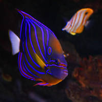 Underwater by nas90ol