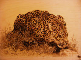 Drinking Leopard (Close up) by ErikBrush