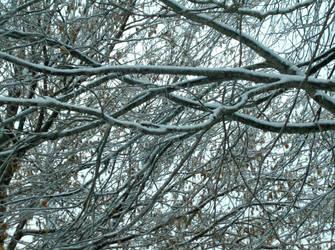 Snowy Canopy by Citrus-Chickadee