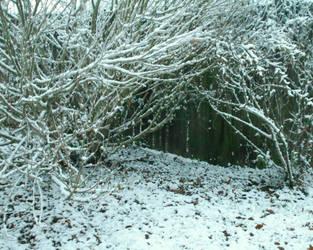 Snowy Hiding Place by Citrus-Chickadee