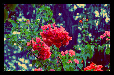 flower by eky09