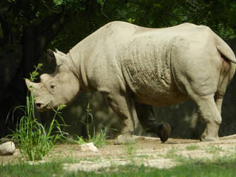 Rhino by OsarionStudios