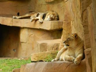 Lions by OsarionStudios