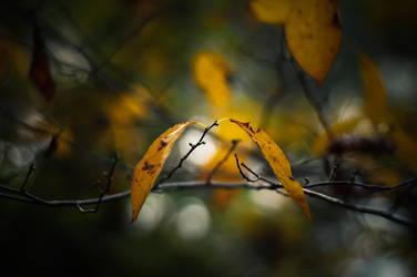 So Far by BaiMilPhotography