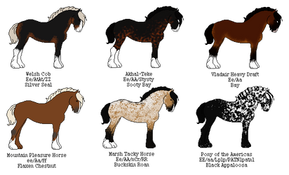 Random Horse Adoptables! by CascadiaRiverKennels