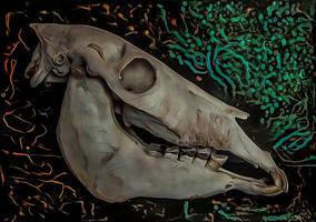Donkey's Skull by DonkehSalad23