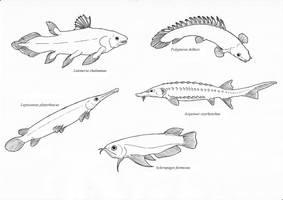The Most Weird, Primitive Fish by Eurwentala