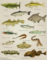 Fish of Baltic Sea by Eurwentala