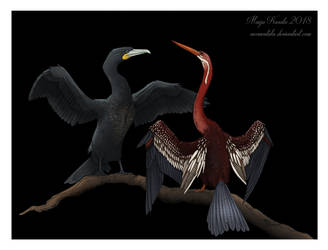 Waterbirds, Not Waterproof by Eurwentala