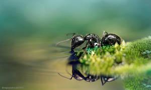 Ant2 by regayip