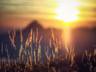 grasses backlit - sunset - austria by 8moments