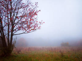 misty autumn by 8moments
