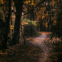 walk in autumnal woods by 8moments