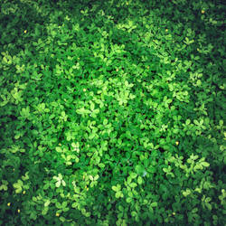 Leaves. by 8moments