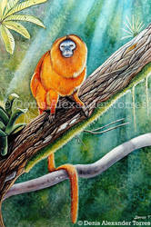 Golden Lion Tamarin by torreoso