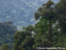 Andean Forest by torreoso