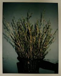 Flowers.  by Beckgalealesz