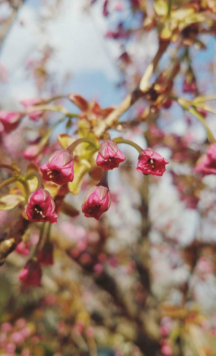 pink by Beckgalealesz