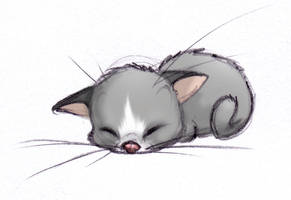 Kitten by ShoJoJim