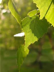 Summer Leaves by Ubersinnlich