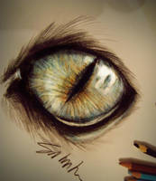 Cat's eye by Kinemesi