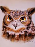 Owl by Kinemesi