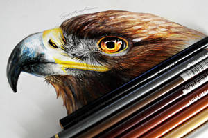 Golden Eagle by Kinemesi
