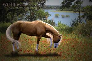 Wildflower by Birandalyn