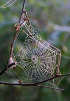 Web by Erfea