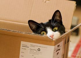 Box Kitty by Enalla