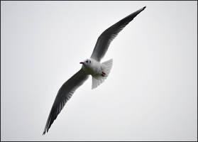 Hang gliding by FrankAndCarySTOCK
