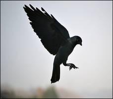 Dark angel wings by FrankAndCarySTOCK