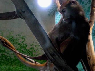 little monkey by gothicsushi