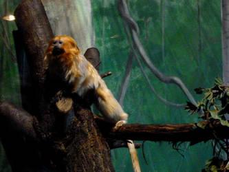 little monkey 2 by gothicsushi