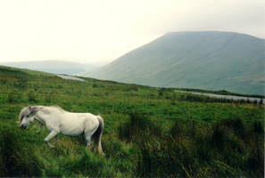 Wild Horse by TheAlmightyBuddha