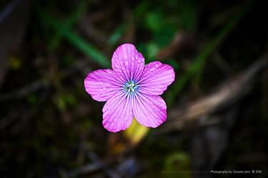 Flower by TopGon