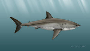 Carcharodon carcharias by TopGon