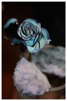Rose bleue 2 by x-miss-drawings-x