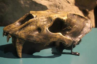 Homotherium serum skull by Daikaiju-fanboy