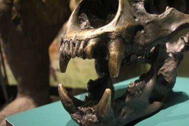 Short-faced Bear skull 2 by Daikaiju-fanboy