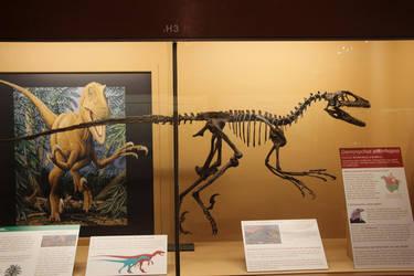 Deinonychus antirrhopus the Terrible Claw by Daikaiju-fanboy