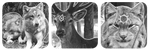 animals n symbols divider by bulletblend