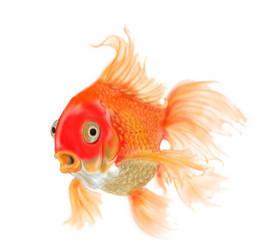 Fish  by WaywardMind