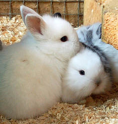 Cutey Bunny by philadelphia13