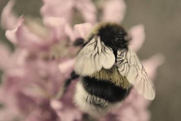 Bee by EarthKnight